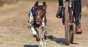 Užijte si hubnutí i zábavu, sportujte se svým psem
