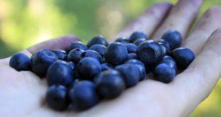 Recept: Dýňové lívance s borůvkami jako ideální zdravá snídaně